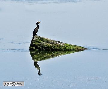 ac-bird reflection-gprill